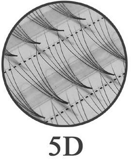 120 Flare Lashes 5D -  ultraleicht - knotenfrei -  0,07 mm, 0,12 mm und 0,15 mm Durchmesser
